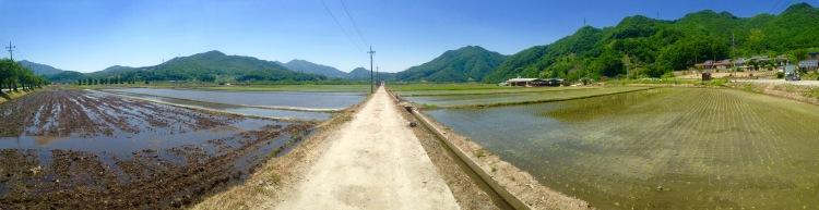 Seoul to Busan Bike Path - May